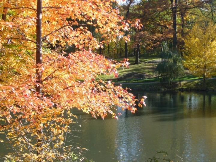 Waldweiher, künstlich, central parc, NY, Aufnahme Kurt Baumann