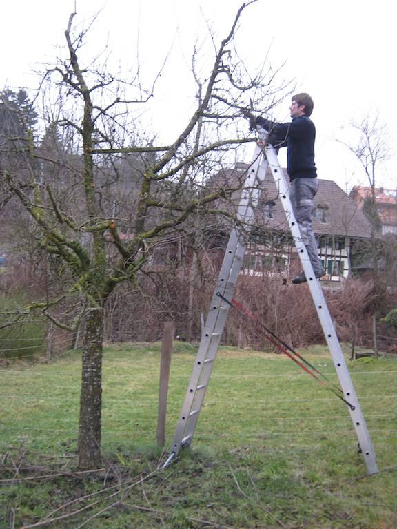 Bäume schneiden  Bäume schneiden | AUSWANDERERBLOG