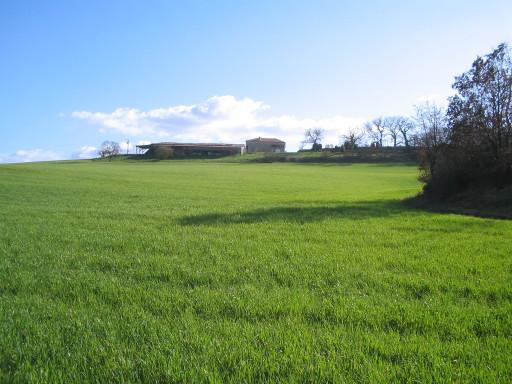 Bio-Weizen auf La Oueyte