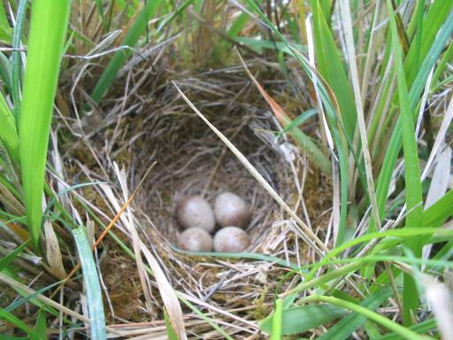 Vogelnest am 22.4.2007