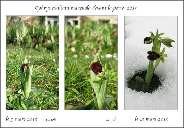 5-marzuola-devant-la-porte-2013