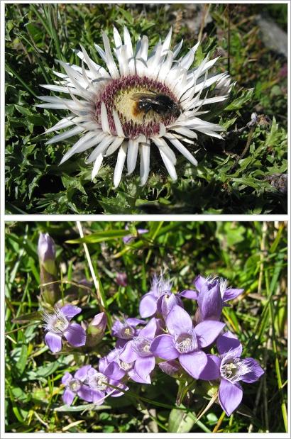 Blumen-Lenk (1)