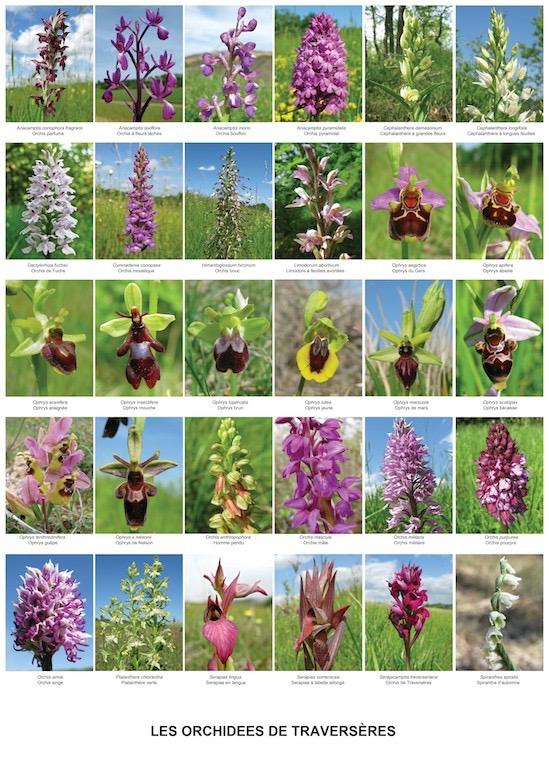 Alle 30 Orchideen 50 x 70.jpg